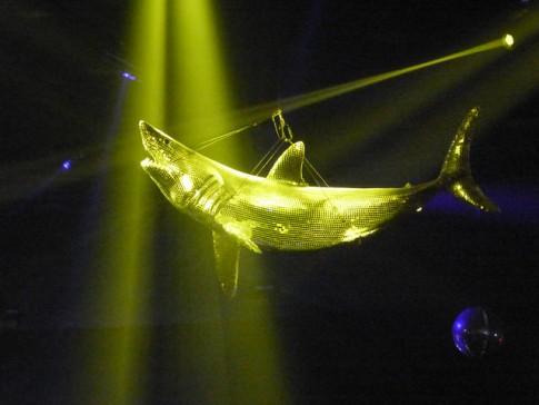 Disco Shark!